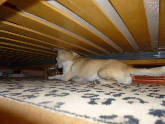 Le lit est vraiment bas c'est un lit chinois ma petite taille me permet d'aller chercher mes jouets et j'aime bien jouer à pas venir quand maman m'appelle !