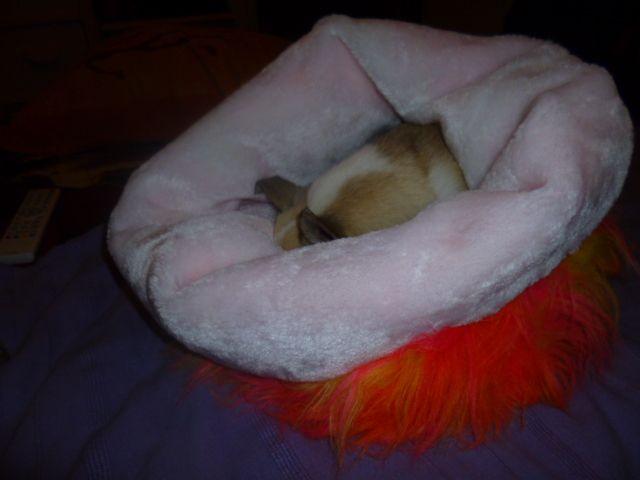 Dodo fourrure de chez Gigi