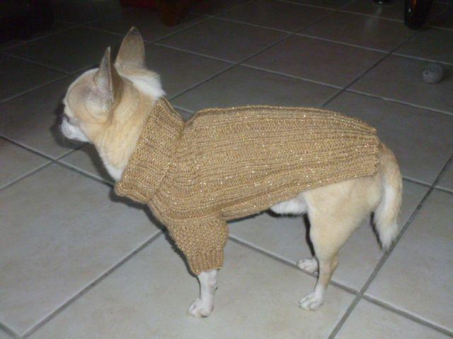 Tuto pull doré chihuahua