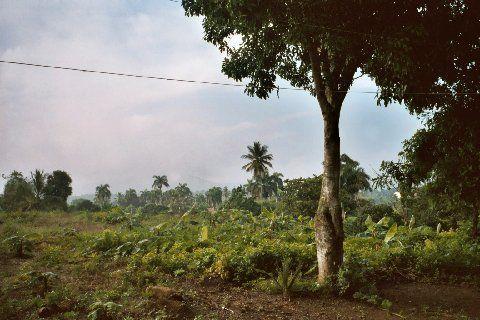 De l'autre côté de la cordillère, le paysage est plus vert