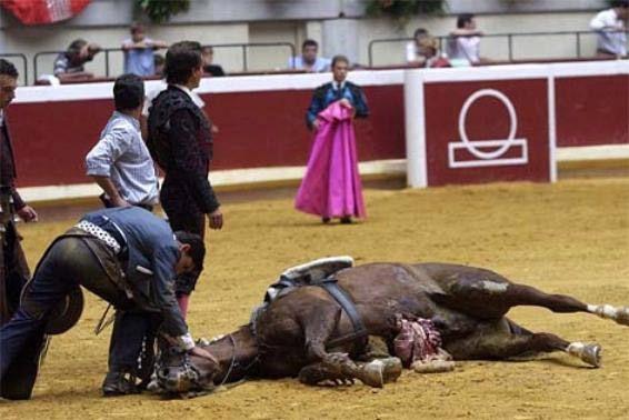 """Le cheval fou de douleur, errait ça et là dans les arènes, selle ballante, le ventre ouvert, les entrailles bleues et rouges pendillaient entre les étriers… """"Vicente Blasco-Ibañez"""