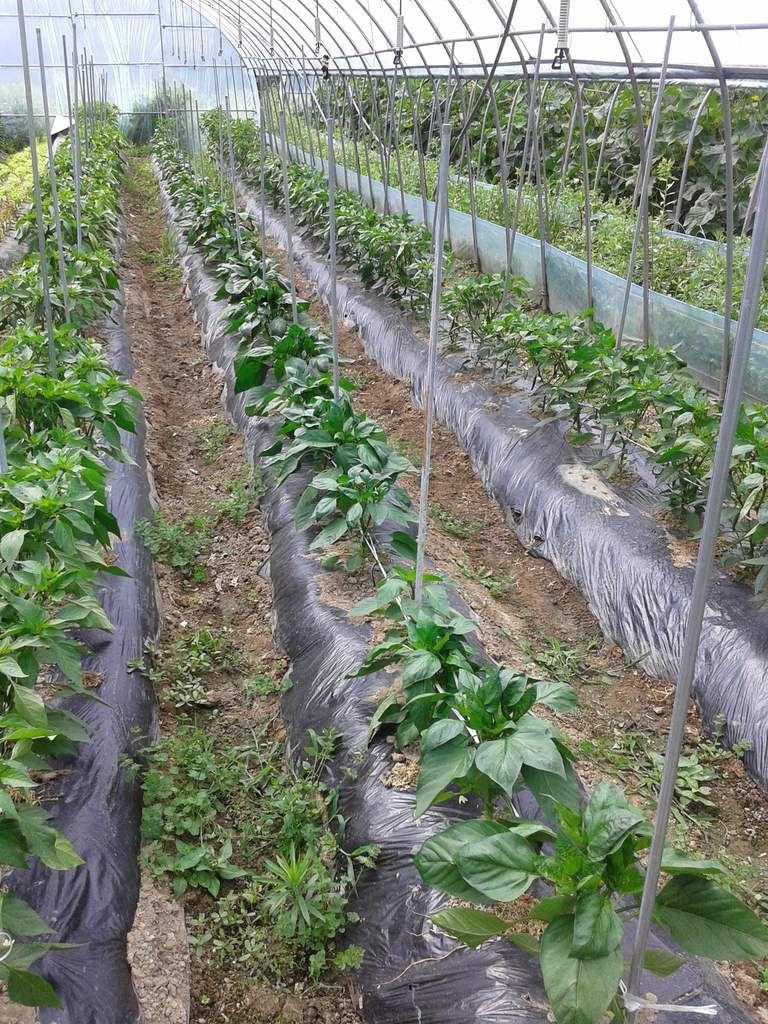 Semaine 1 - 100 Flower Farm (Juin)