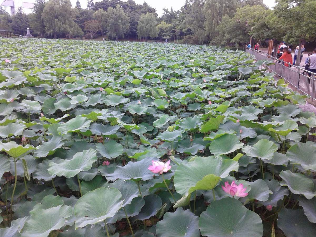 Semaine 3 - 100 Flower Farm (Juin)