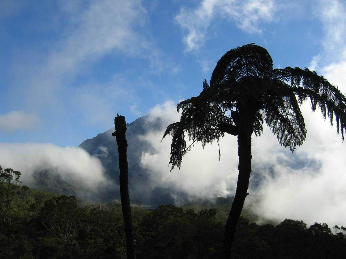 Le parc national de la Réunion autorise les expéditions scientifiques mais sous contrôle. (photo L.D.)