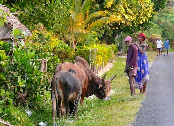 Contrairement à Tamatave ou Antananarive, Sainte-Marie était considérée jusque-là comme un havre de tranquillité. (photo LD)