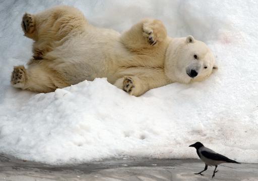 De nouvelles espèces animales protégées par la Convention de Bonn