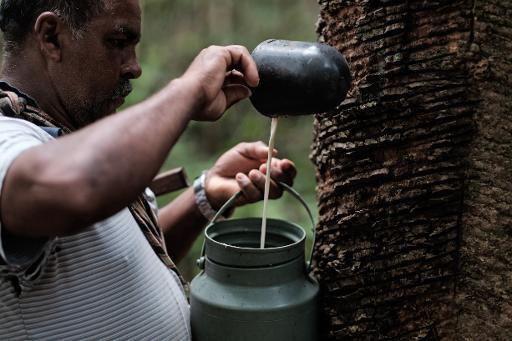 La « fabrique de l'amour » en plein cœur de l'Amazonie brésilienne