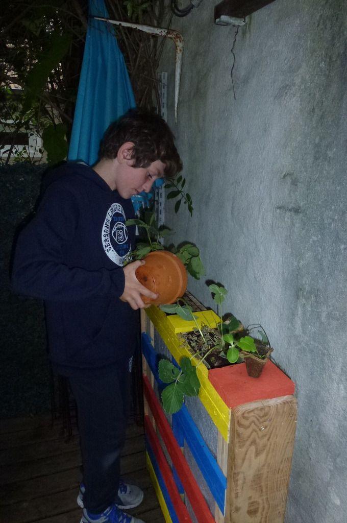 L'emplacement des plantes est savament choisi.