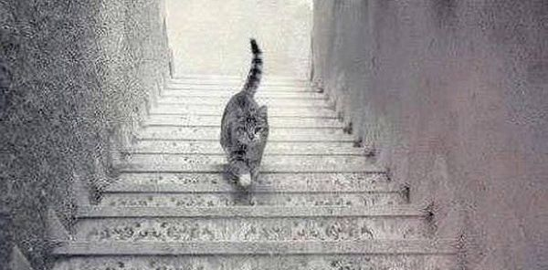 CHAT MONTE OU CHAT DESCEND ?
