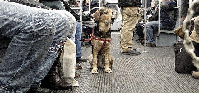 Los perros ya pueden viajar en el Metro de Madrid