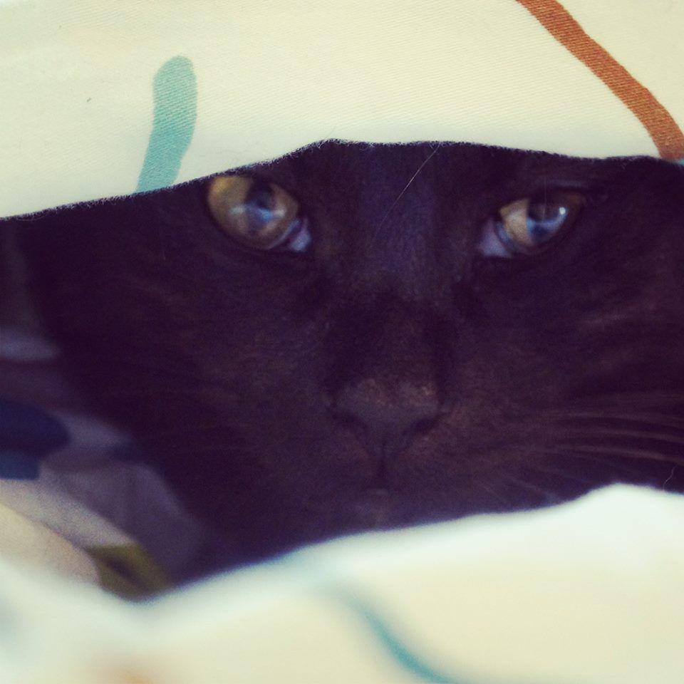mit einer katze im bett so ein katzenleben. Black Bedroom Furniture Sets. Home Design Ideas