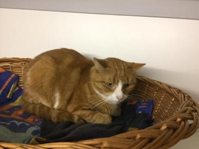 Aktuelle Fotos aus der Katzenpension