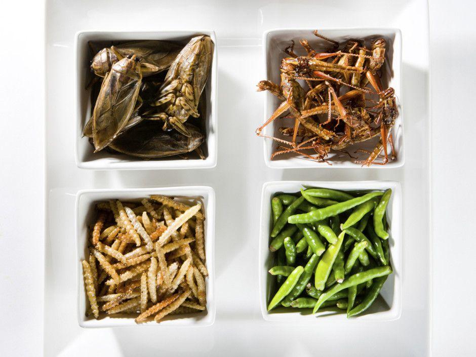 Des insectes dans nos assiettes : pour ou contre ?