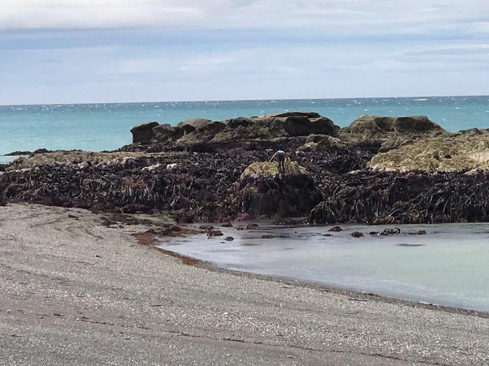 Le sol marin sort de terre après le séisme de magnitude 7,8 qui a frappé la Nouvelle-Zélande