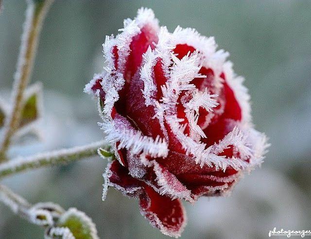 Réchauffement médiatique : Des records de froid battus lors des huit derniers mois ...