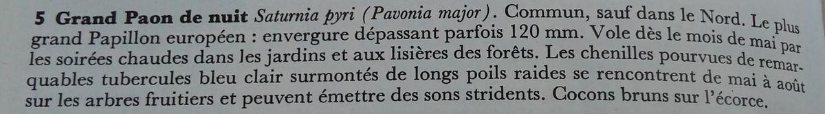 Planche du Grand Paon de nuit, extrait du Guide du promeneur dans la nature de J.Felix / J. Toman / K. Hisek