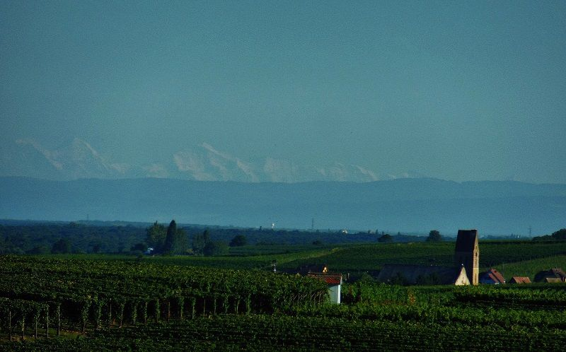Alpes bernoises vues du Haut-Rhin