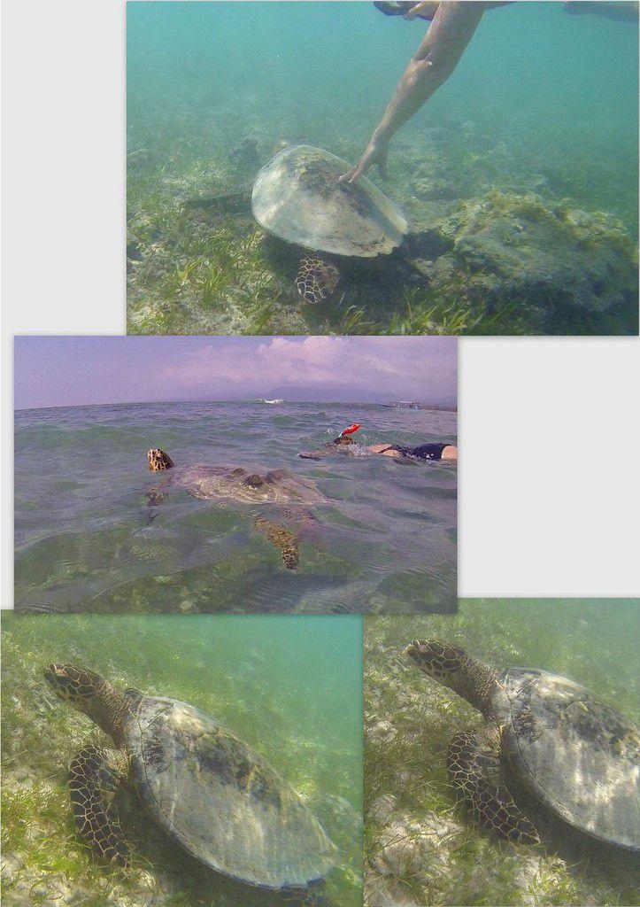 Et une tortue, une