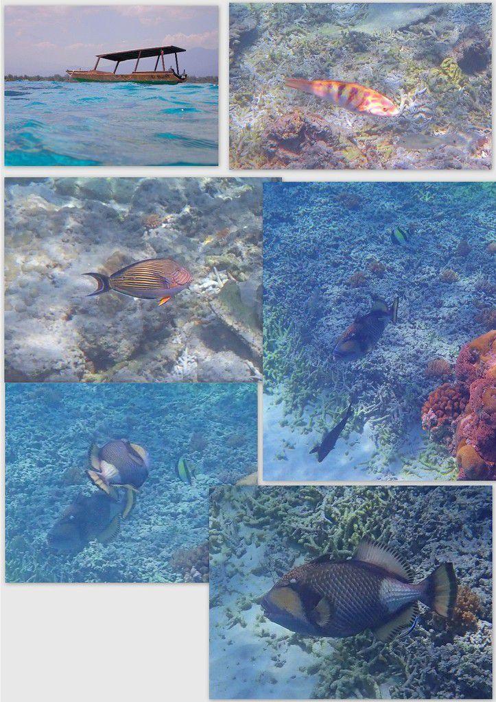 Gili Meno, coraux et poissons à gogo