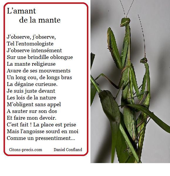 L'actu entomologiste de Citons-precis/citations : la mante religieuse, inlassable prédatrice