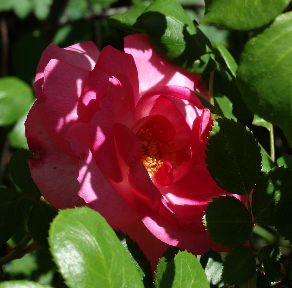 Jardin en fleurs...