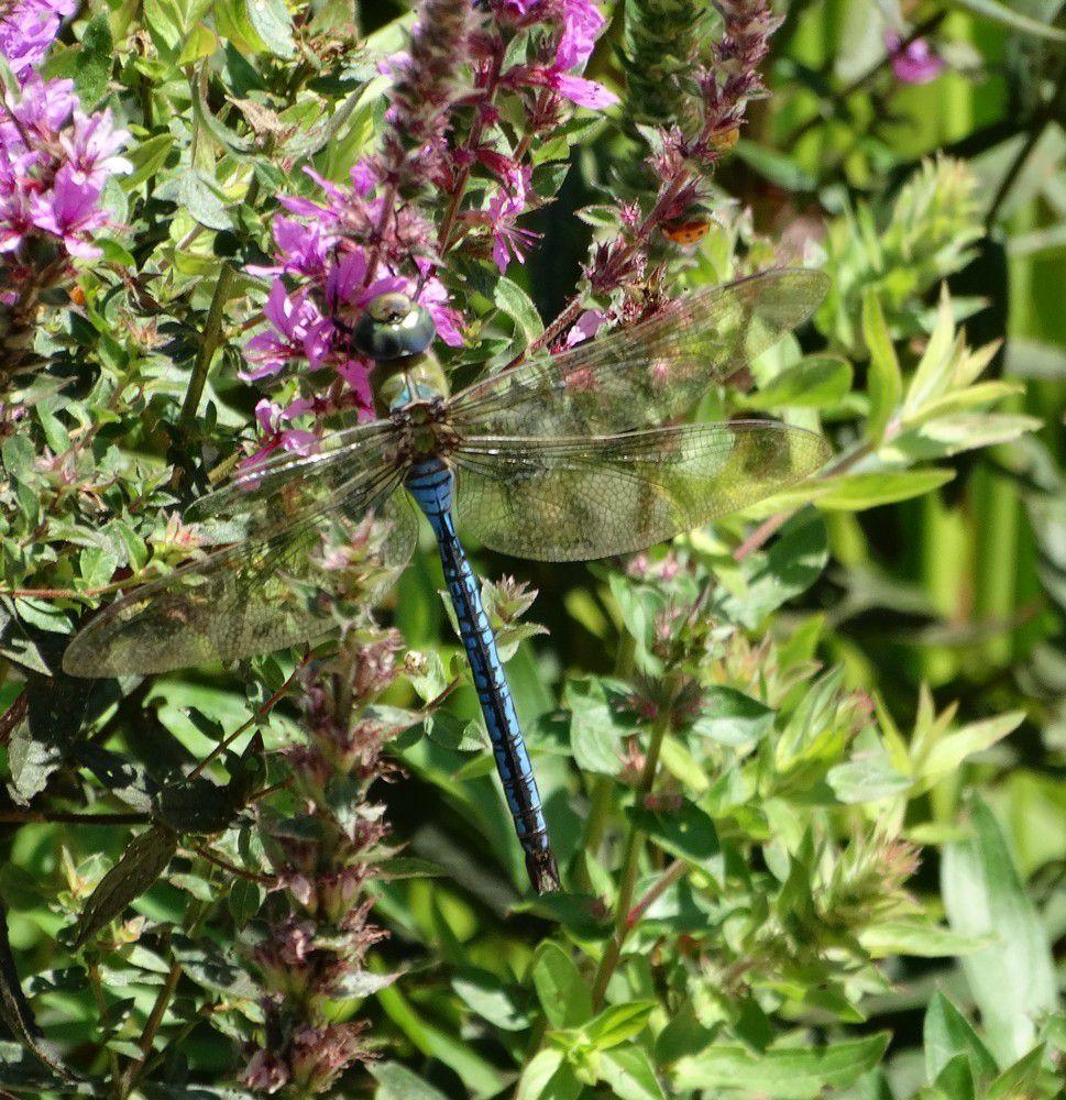 Les jardins d 39 eau de carsac aillac la faune le blog for Ou trouver des poissons rouges
