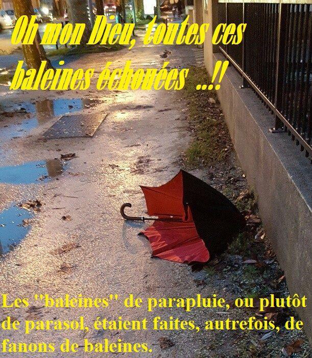 Parapluie abandonné : d'autres participations...