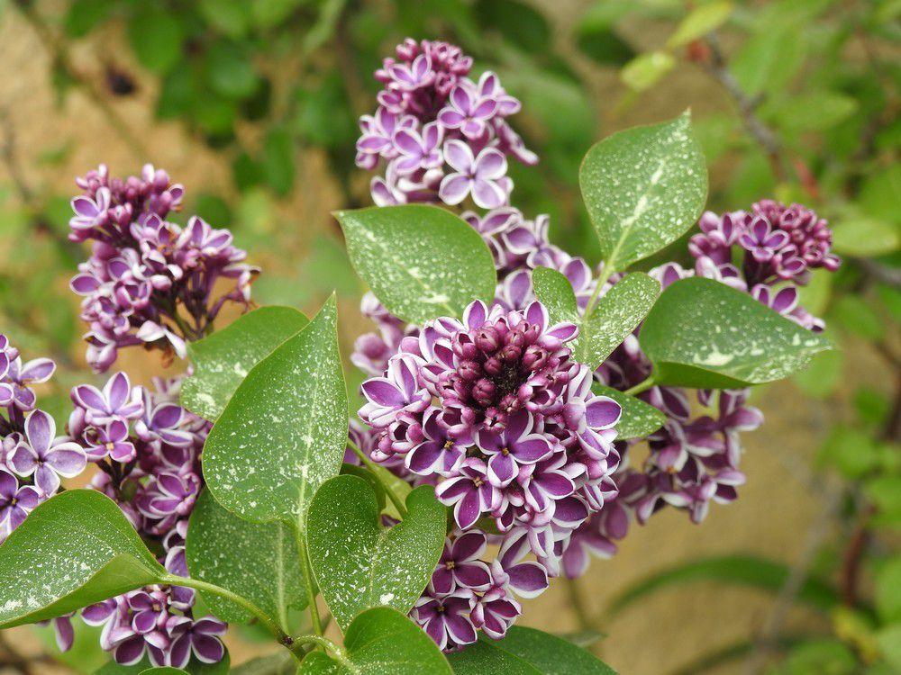 Quelques fleurs dans mon jardin en avril le blog de for Fleurs dans le jardin