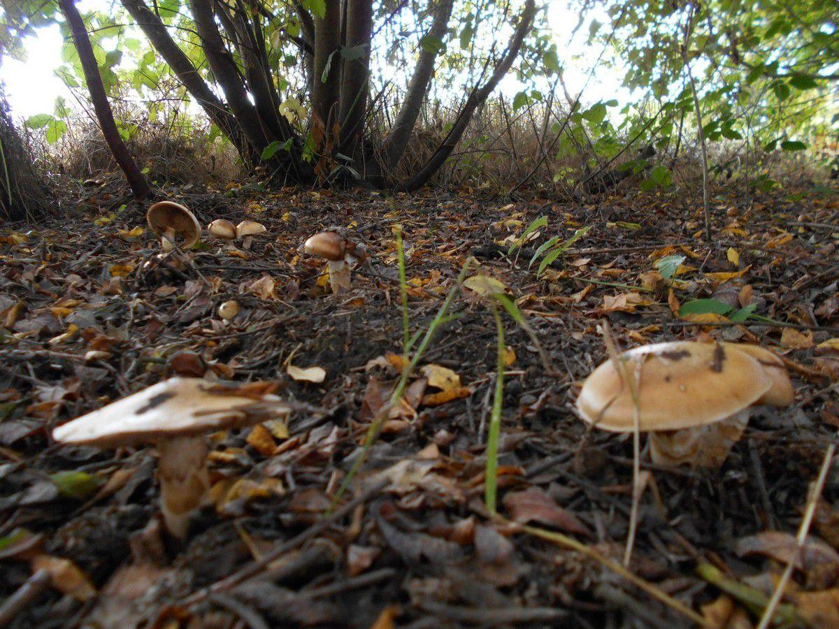 Automne : champignons et châtaignes