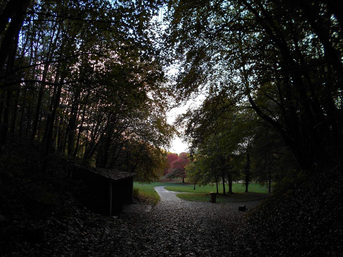 Un dimanche au bois