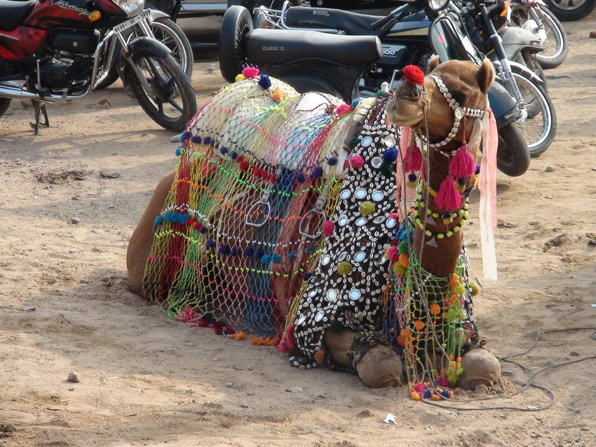 RAJASTHAN...  Plantes - Animaux (91 vues)