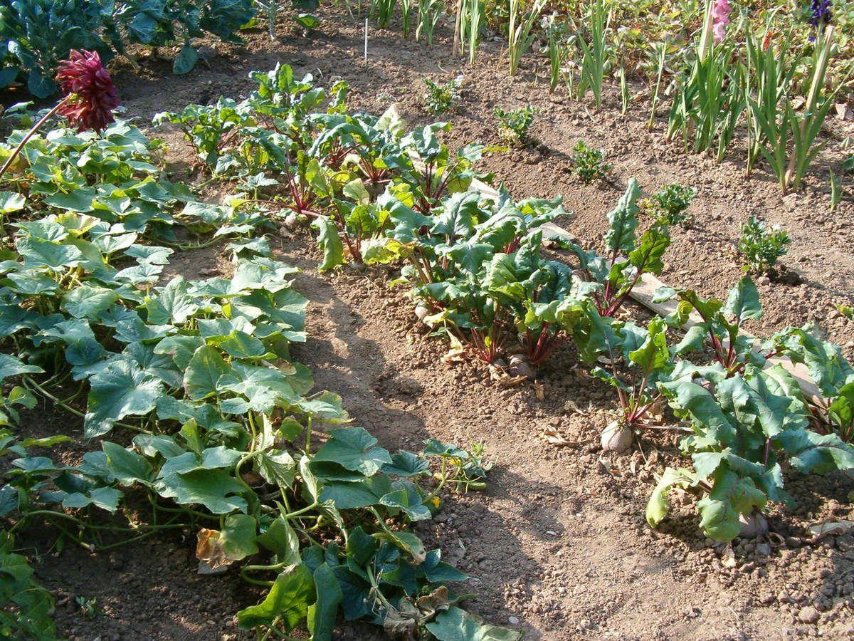 Malgré la canicule et la sécheresse mon jardin se porte relativement bien !