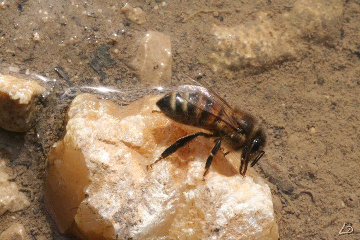 Merveilleuses et indispensables abeilles !