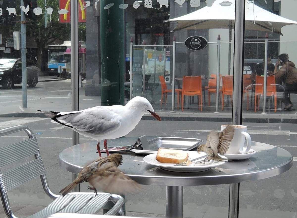 Un petit déjeuner (trop) copieux