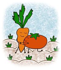 Des potes au potager le jardin du caillou - Association de legumes au potager ...