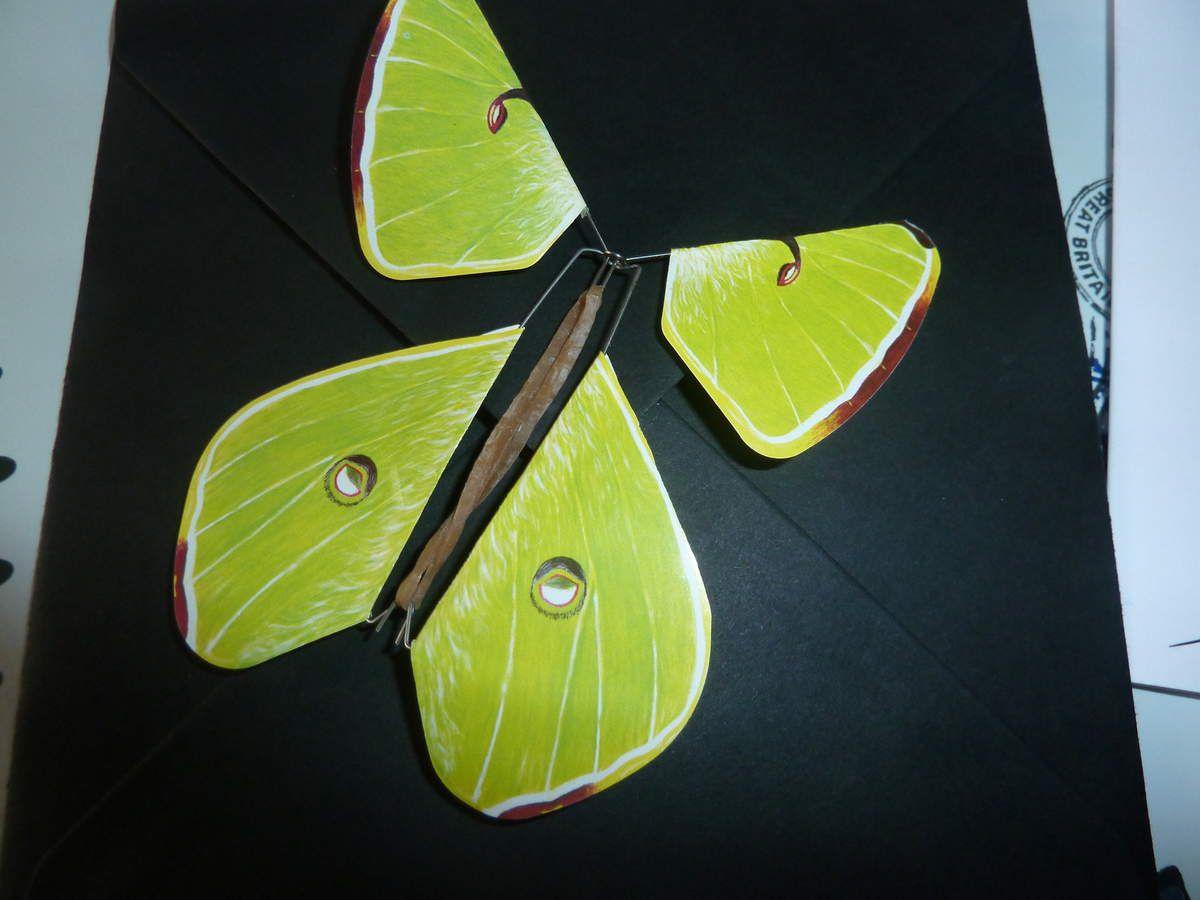 livret dans une carte et vous l'ouvrez et un magnifique papillon prends son envol