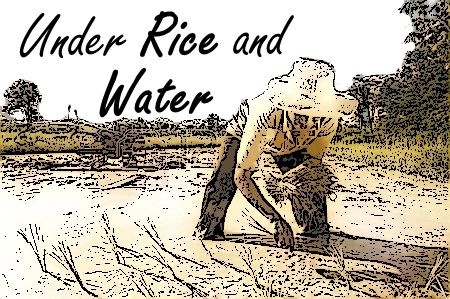 Under Rice and Water