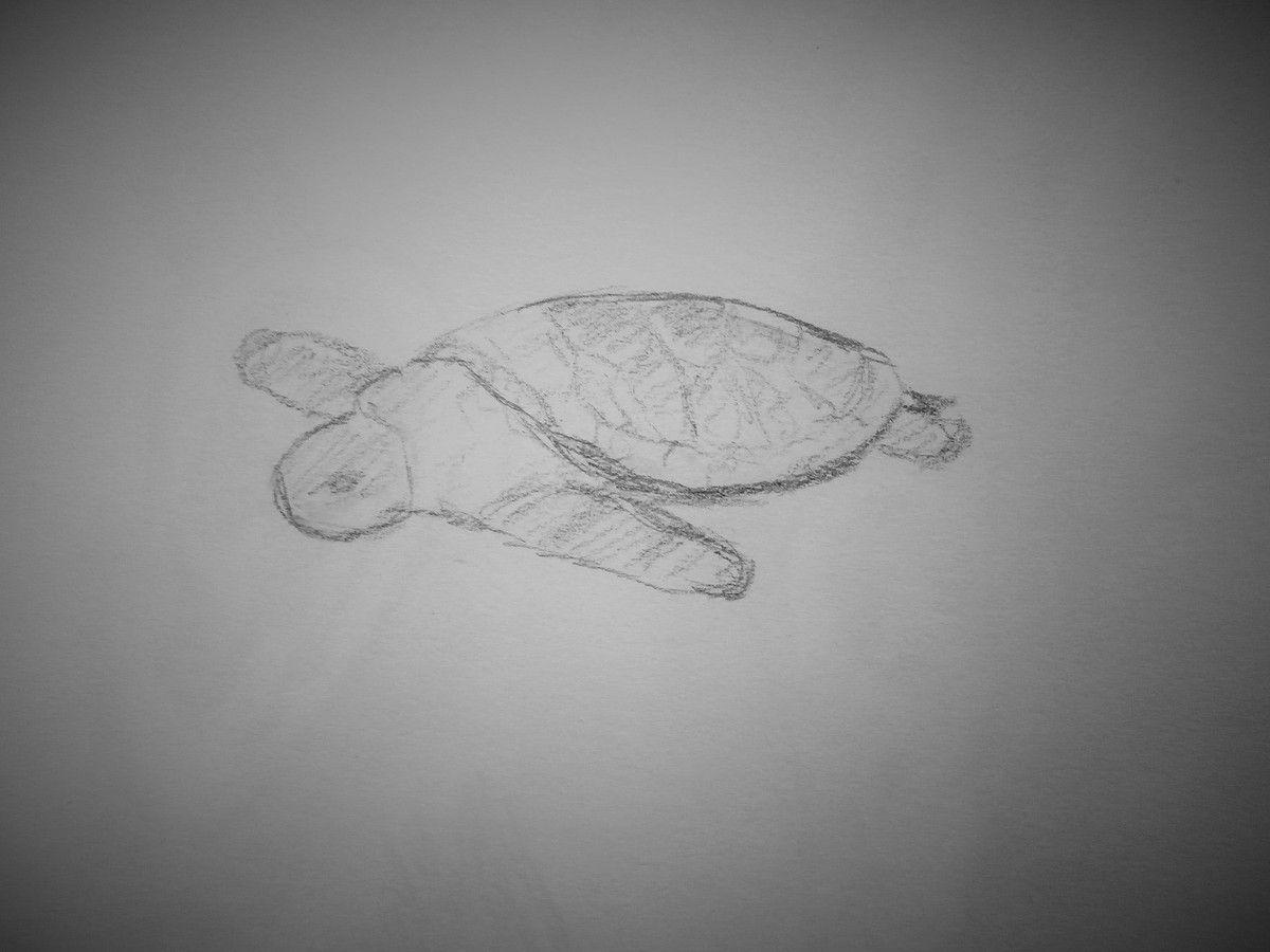 Tortue de Mer, crayon HB
