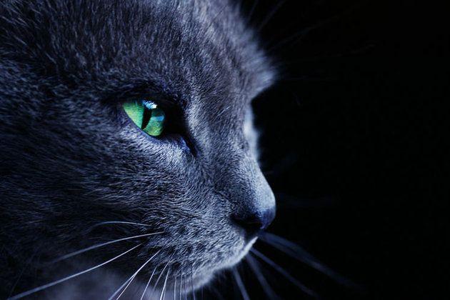 Les chats et les chiens peuvent-ils voir les esprits ?