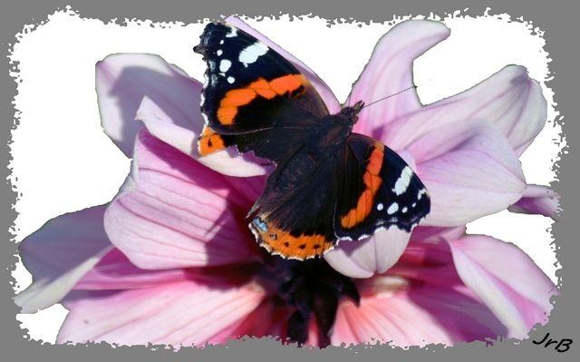 Le papillon, éternel voyageur, est le signe d'une visite (bienfaisante ou malfaisante).