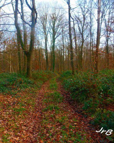 Les chemins buissoniers de la Forêt de Saint-Gobain