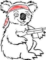 Che Koala !