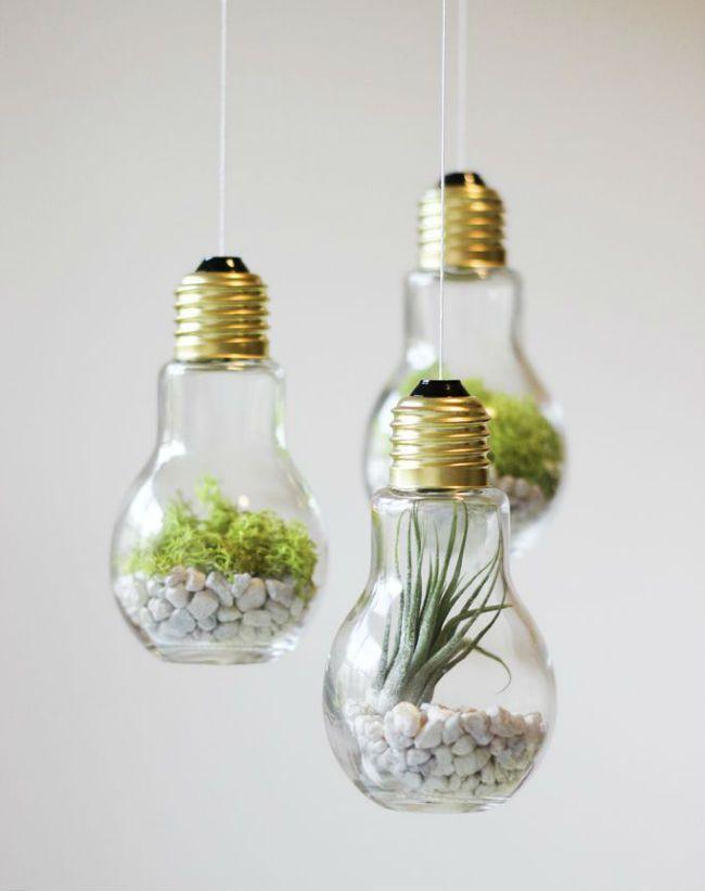 Un terrarium dans les ampoules usagées