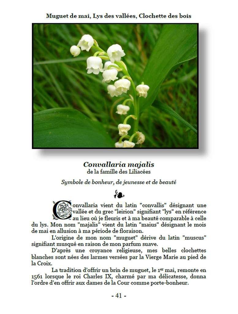 Muguet - Convallaria majalis