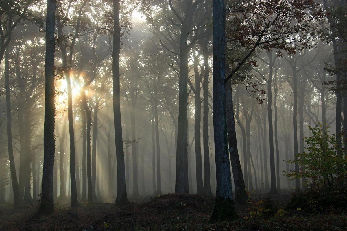Perseigne s'habille de lumière..... pour être plus belle ..!