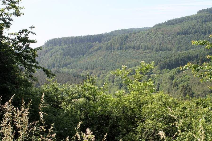 mitten im Wald - dort irgendwo unten im Tal liegt der Staudenhof