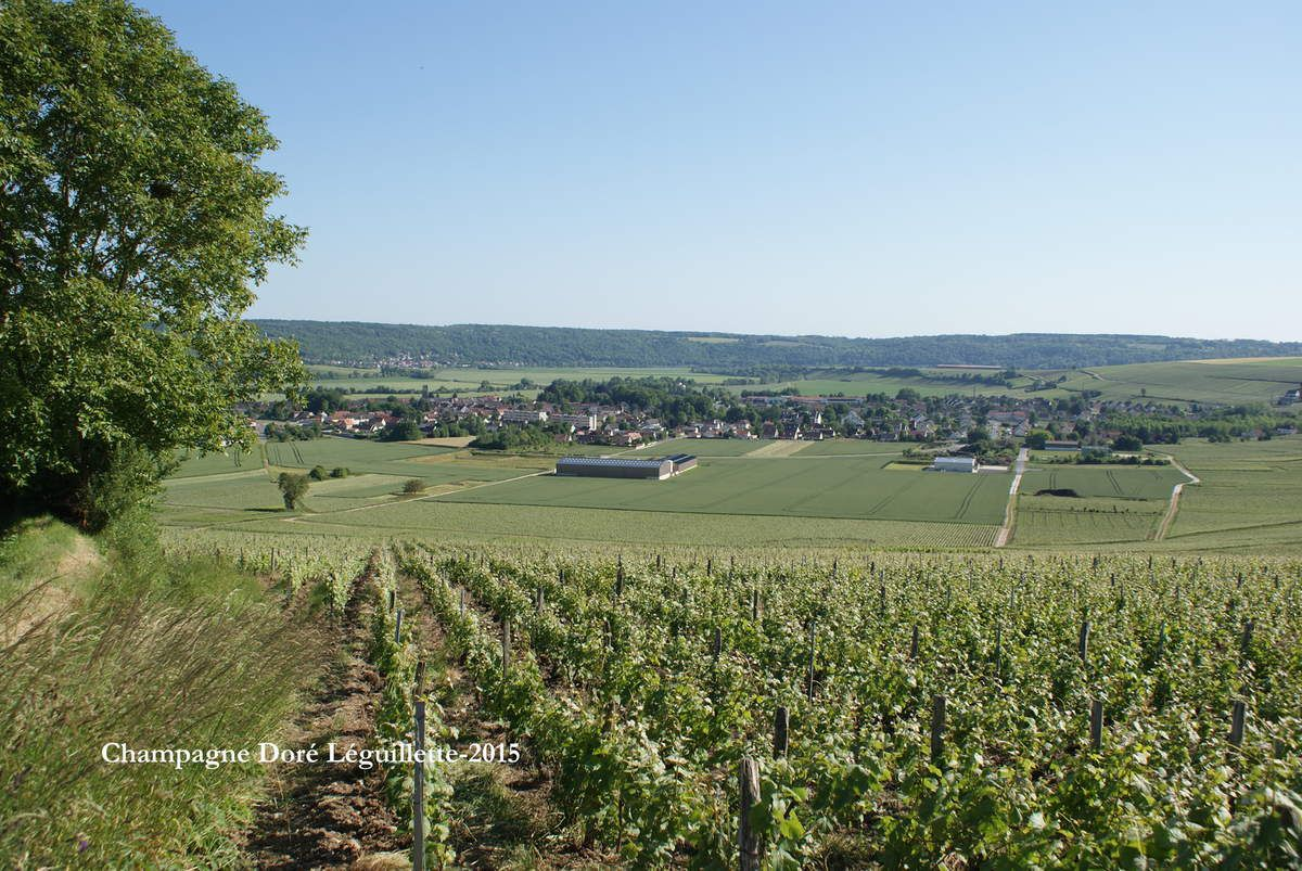 Vue sur le vignoble de Charly sur Marne