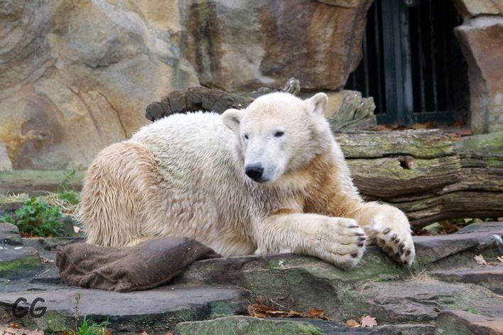 Erinnerung an Knut November 2008