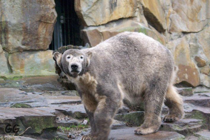 Andenken an Knut 07.+08.03.2009