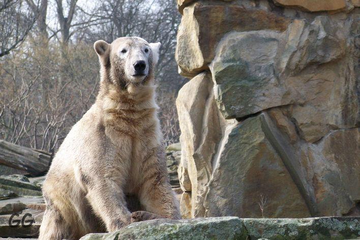 Erinnerung an Knut März 2009